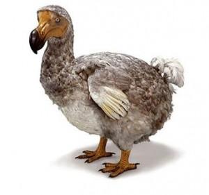 dodo_bird